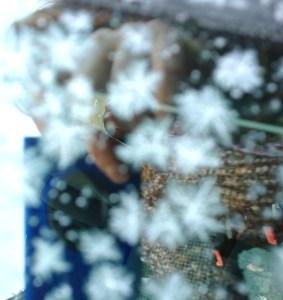 Spiegelbild mit Eisblumen 2
