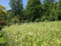 wunderschöne Blumenwiesen